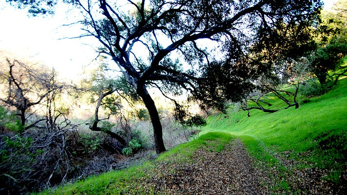 Cadman Drive Trail at Griffith Park