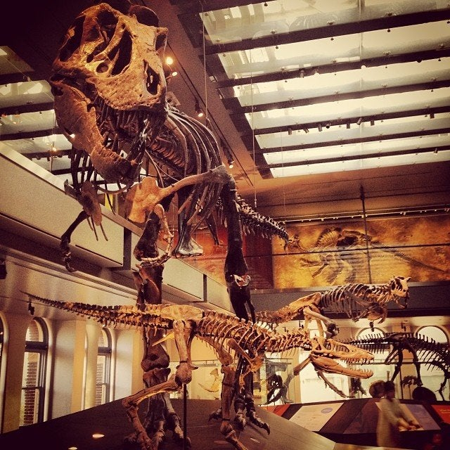 T. rex growth series at the Natural History Museum